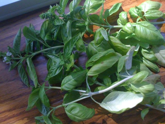 fresh basil!